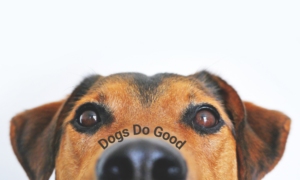 photo of a dog for dogs do good
